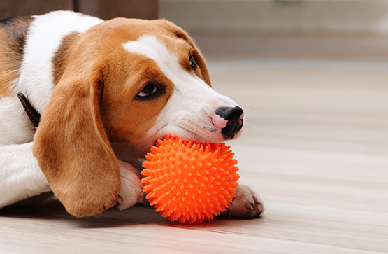 Dog with toy photo